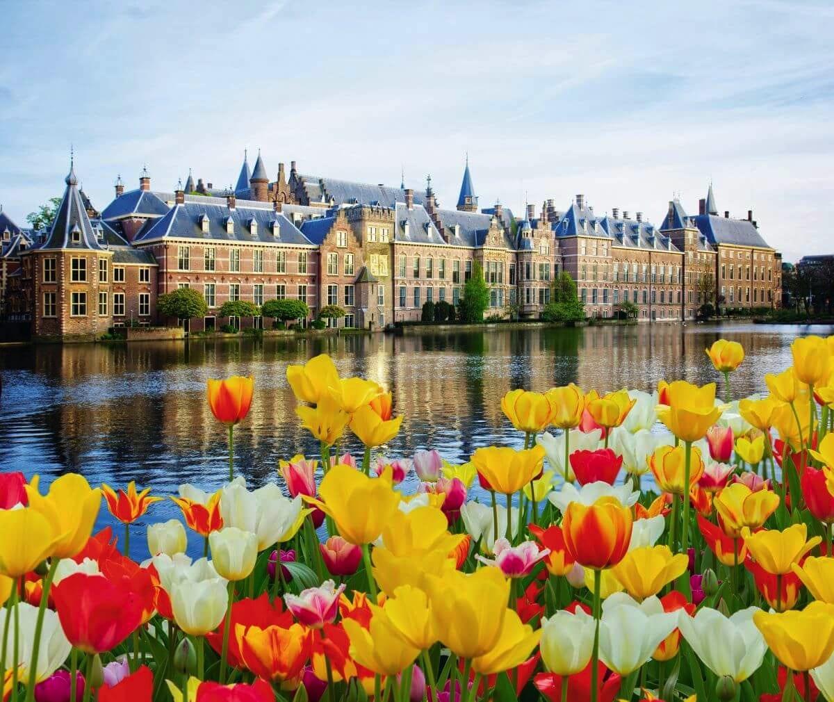 Tulpenblüte de Luxe